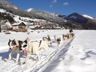 Dog sledding | La chapelle d'Abondance | campsite l'Oustalet | winter | Châtel