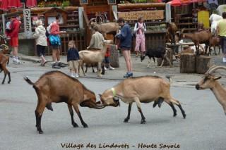 Village des Chèvres | Les Lindarets | Camping l'Oustalet | Châtel