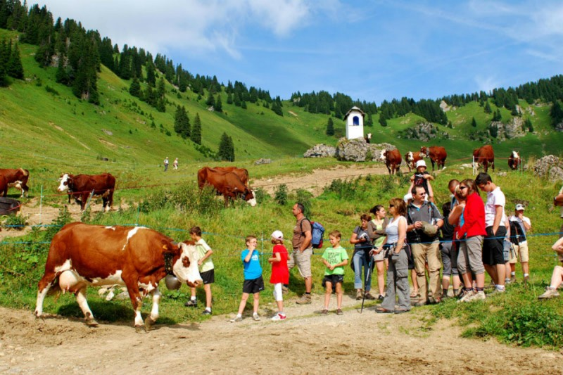 repas en alpage | camping l'Oustalet | châtel | famille